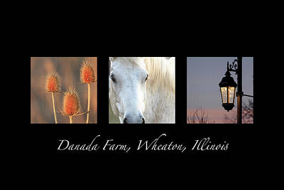 Photograph - Danada Farm Triptych by Joni Eskridge
