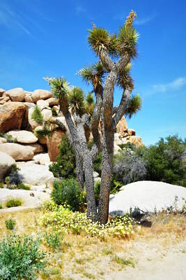 Photograph - Dance In The Garden - Joshua Tree National Park by Glenn McCarthy Art and Photography