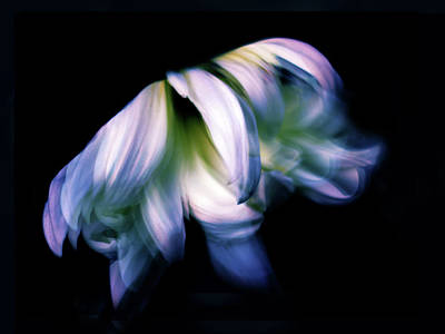 Abstract Movement Digital Art - Dance by Jessica Jenney