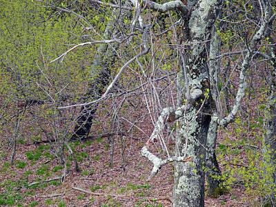Photograph - Dance Of Branches by Lynda Lehmann
