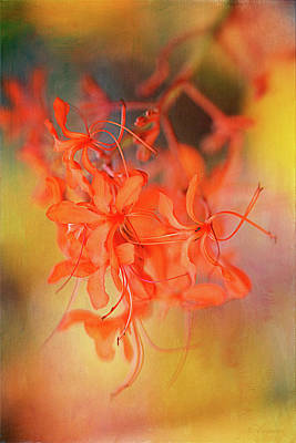 Photograph - Dance Of Fire  by Maria Angelica Maira