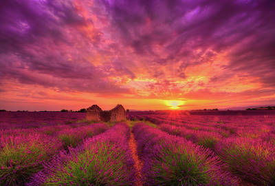 Provence Photograph - Dance Of Passion by Midori Chan