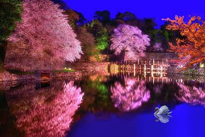 Photograph - Dance Of Sakura by Midori Chan