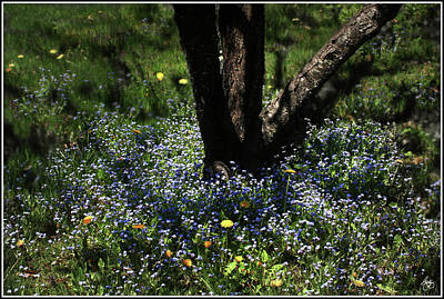 Photograph - Dance Of The Bluets by Wayne King