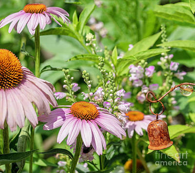 Photograph - Dance Of The Cone Flowers by Cathy Donohoue