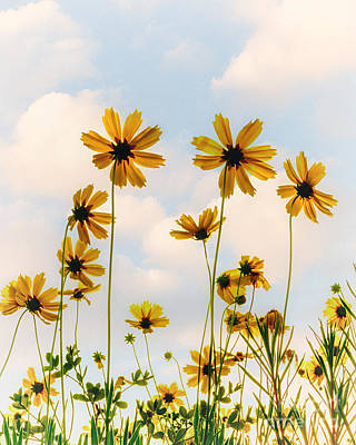 Dance Of The Coreopsis Art Print by Tamyra Ayles