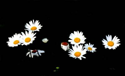 Photograph - Dance Of The Daisies by Wild Thing