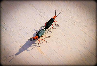 Photograph - Dance Of The Desert Blister Beetles by Bonnie Follett