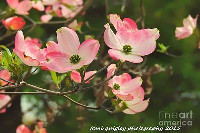 Photograph - Dance Of The Dogwood by Tami Quigley