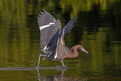 Dance Of The Egret Art Print by Sandy Sisti