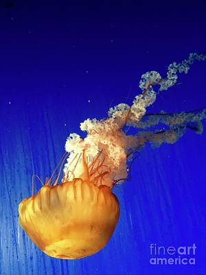 Photograph - Dance Of The Jelly by Beth Saffer
