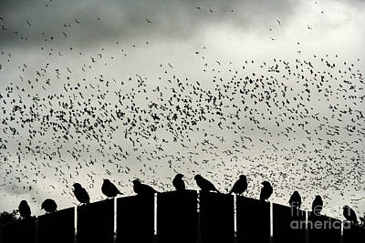Migration Photograph - Dance Of The Migration by Jan Piller