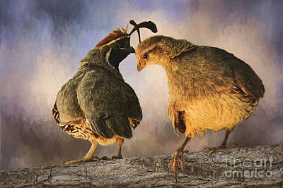 Topknot Photograph - Dance Of The Quail by Priscilla Burgers