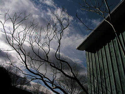 Photograph - Dance Of The Sky And Trees by Christine Montague