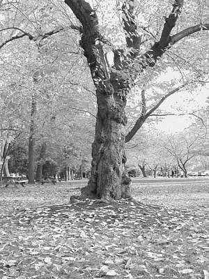 Photograph - Dance Of The Trees by Emery Graham