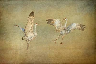 Photograph - Dance Ritual II, Sandhill Cranes by Flying Z Photography by Zayne Diamond