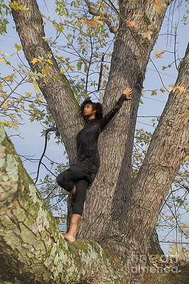 Photograph - Dancer In A Tree by Dan Friend