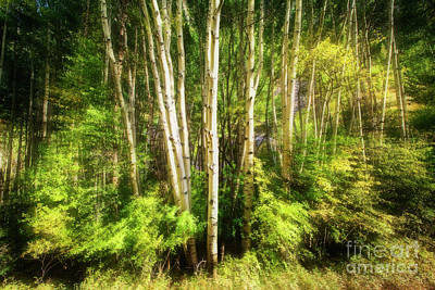 Photograph - Dancing Aspens by Scott Kemper