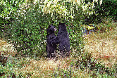 Photograph - Dancing Bears And A Big Bear Hug by Peggy Collins