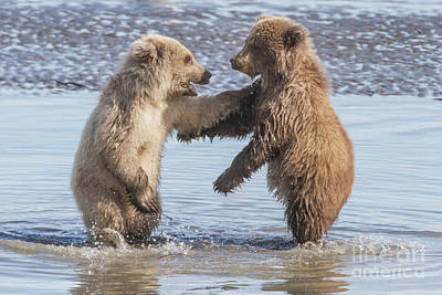 Photograph - Dancing Bears by Chris Scroggins