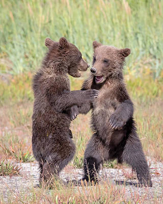 Photograph - Dancing Bears by Jack Bell
