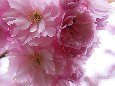 Photograph - Dancing Blossom by Brenda Kean