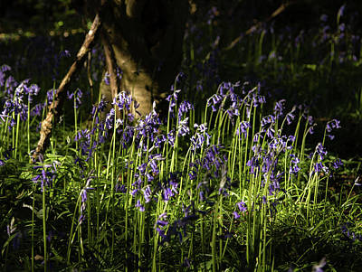 Photograph - Dancing Bluebells by Kathryn Bell