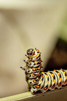 Photograph - Dancing Caterpiller by Kay Brewer