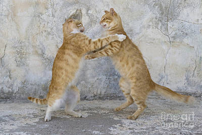 Dancing Cats Art Print