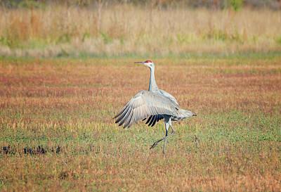 Photograph - Dancing Crane by Loree Johnson