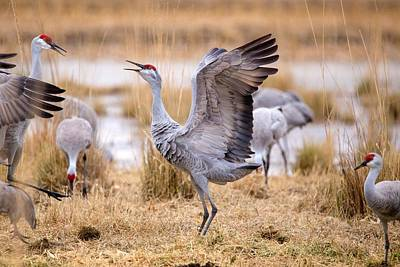 Photograph - Dancing Crane by Lynn Hopwood