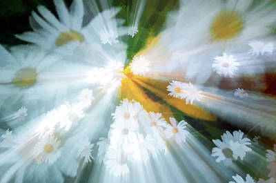 Photograph - Dancing Daisies by Maria Coulson