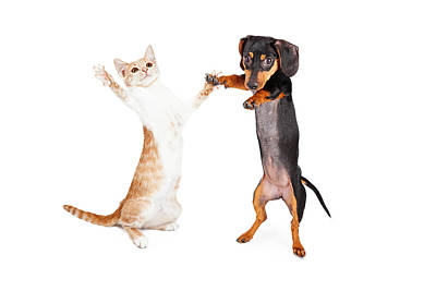 Dancing Doxie Dog And Kitten Art Print