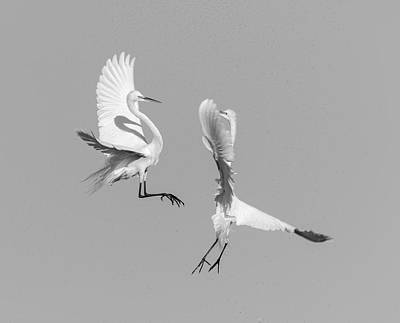 Photograph - Dancing Egrets 2017-3 by Thomas Young