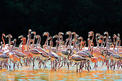 Photograph - Dancing Flamingos by Renee Sullivan