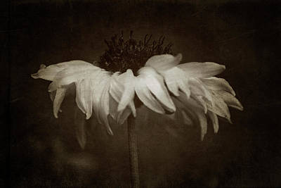 Photograph - Dancing Flower by Erica Kinsella