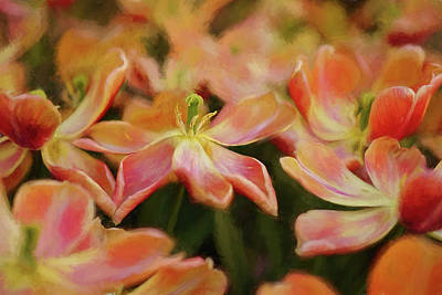 Photograph - Dancing Flowers by Mary Buck