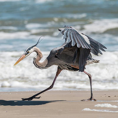 Photograph - Dancing Heron #1/3 by Patti Deters