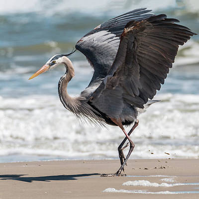 Photograph - Dancing Heron #2/3 by Patti Deters