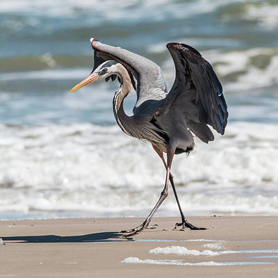 Photograph - Dancing Heron #3/3 by Patti Deters