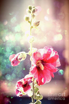 Photograph - Dancing Hollyhock by Mary-Lee Sanders