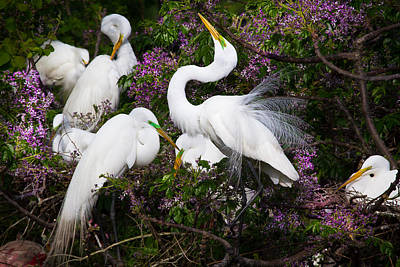 White Feather Photograph - Dancing In Flowers - Great Egrets - Texas by Ellie Teramoto