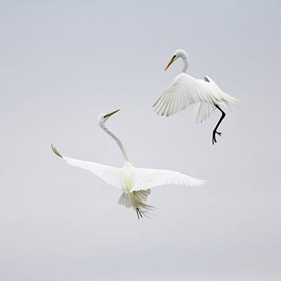 Bird Photograph - Dancing In The Air by Karen Wang