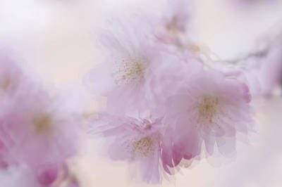 Photograph - Dancing In The Air. Spring Pastels by Jenny Rainbow