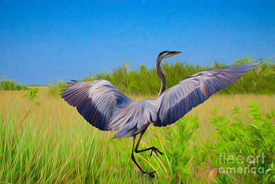 Dancing In The Glades Art Print