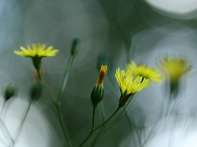 Photograph - Dancing In The Light by I'ina Van Lawick