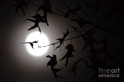 Photograph - Dancing In The Moonlight by Maria Urso