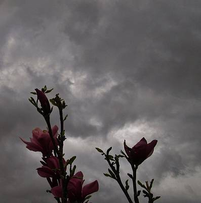 Photograph - Dancing In The Storm by Sharon Ackley