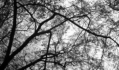 Photograph - Dancing In The Trees by Teri Schuster