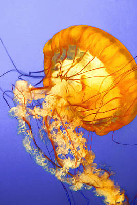 Photograph - Dancing Jellyfish by Bonnie Follett